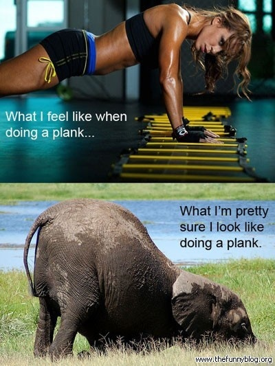 plankfunny