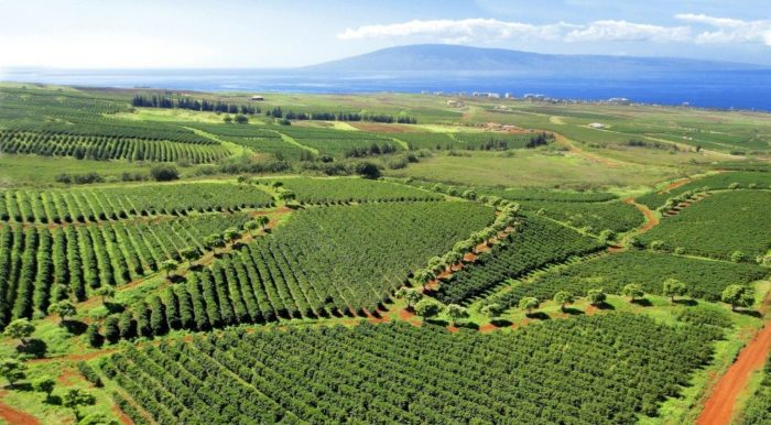 coffee farms where caffeine anhydrous is found