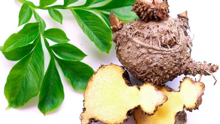 glucomannan root and plant